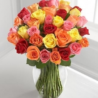 4 dozen Multi Color Roses