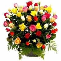 24 Multi Colored Roses basket
