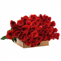Bunch of 36 Long Stem Red Roses