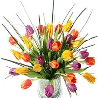 15 Tulip for your mom